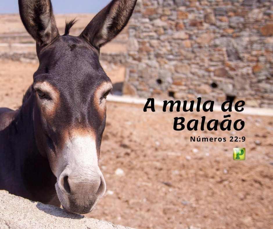 A mula de Balaão – Números 22:9