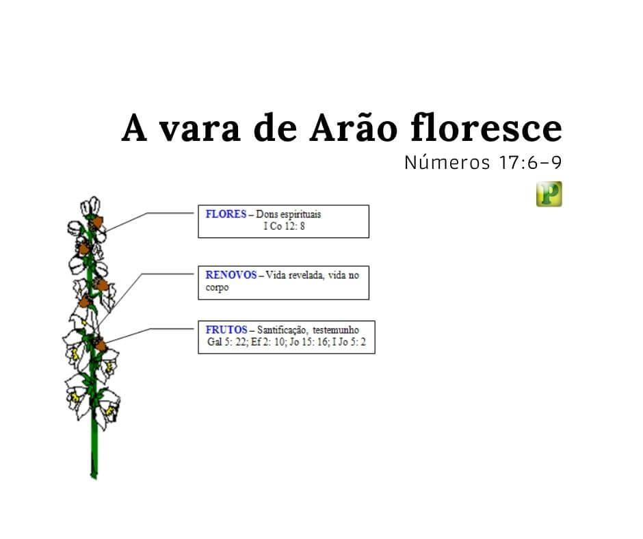 A vara de Arão floresce – Números 17:6–9