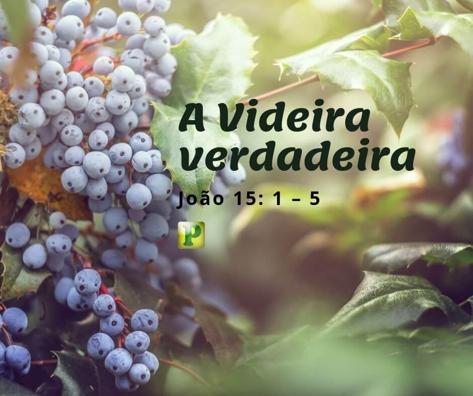 A Videira verdadeira  João 15: 1 – 5
