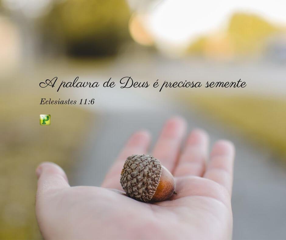A palavra de Deus é preciosa semente – Eclesiastes 11:6