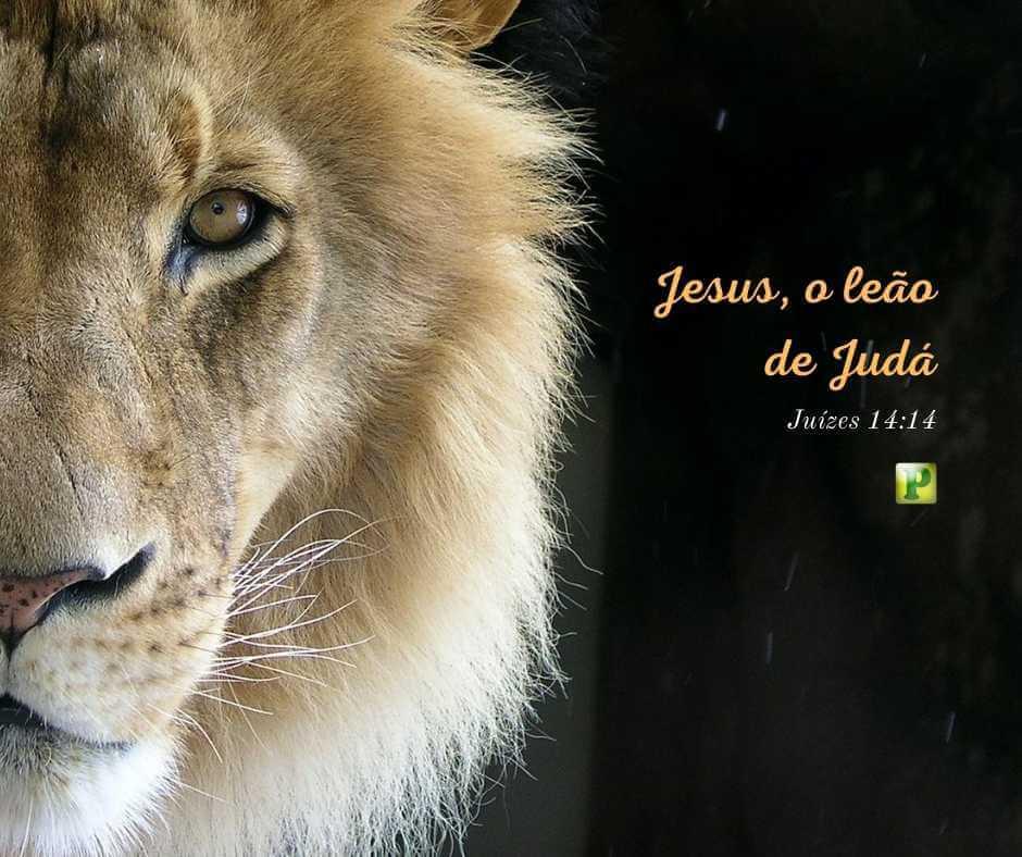 Jesus, o leão de Judá – Juízes 14:14