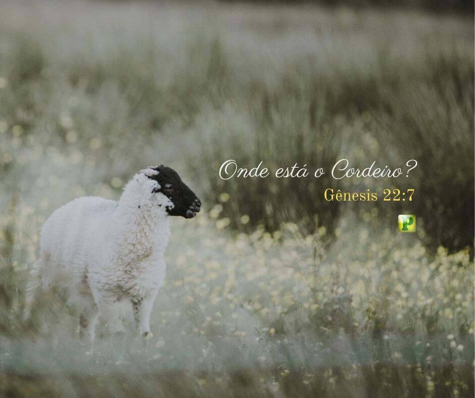 Onde está o Cordeiro – Gênesis 22:7