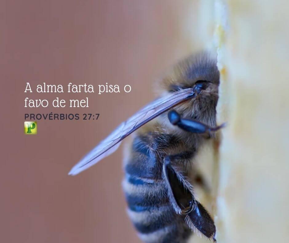 A alma farta pisa o favo de mel – Provérbios 27:7