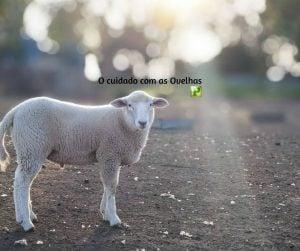 O cuidado com as Ovelhas – Provérbios 27:23-27