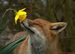 raposass