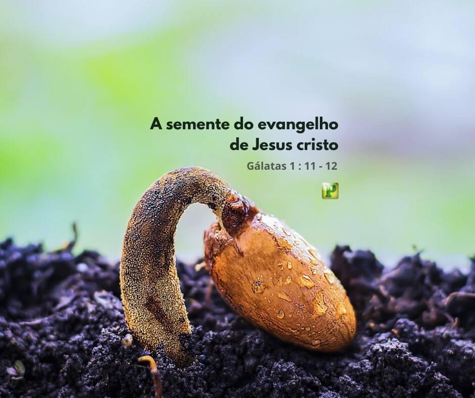 A semente do Evangelho de Jesus Cristo – Gálatas 1:11-12