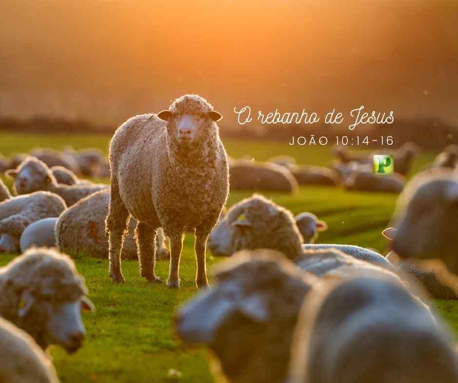 O rebanho de Jesus – João 10:14-16