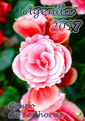 Agenda Rosa 1