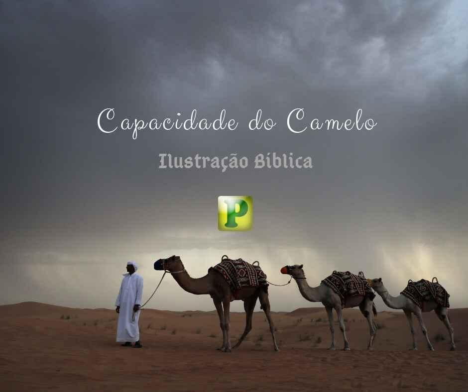 Ilustração bíblica – Capacidade do Camelo