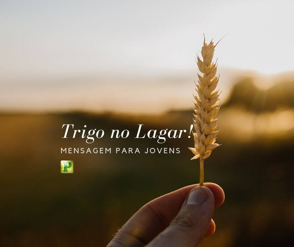 Trigo no Lagar – Mensagem para Jovens