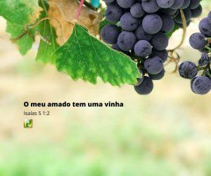 Isaías 5:1-2 – O meu amado tem uma vinha