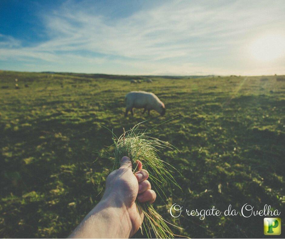 A Ovelha resgatada – Lucas 15: 4-6 e 10