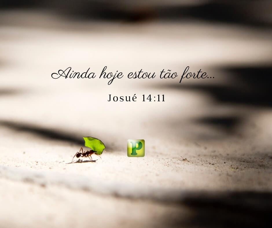 Ainda hoje estou tão forte… – Josué 14:11