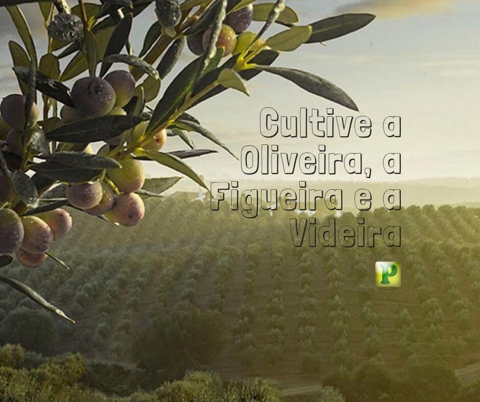 Juízes 9 – Cultive a Oliveira, a Figueira e a Videira