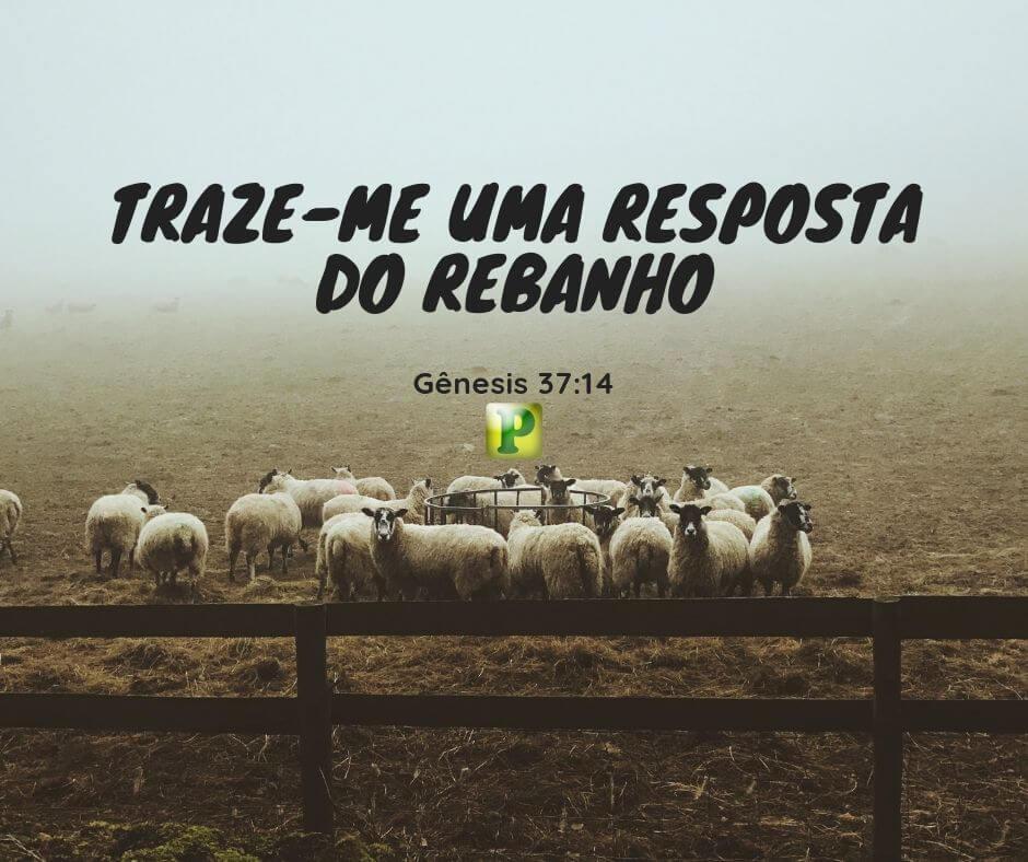 Gênesis 37:14 – Traze-me uma resposta do rebanho