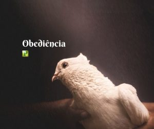 Obediência – Atos 8:26
