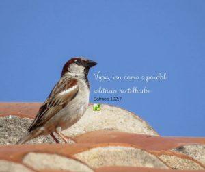O Pardal solitário –  Salmos 102:7