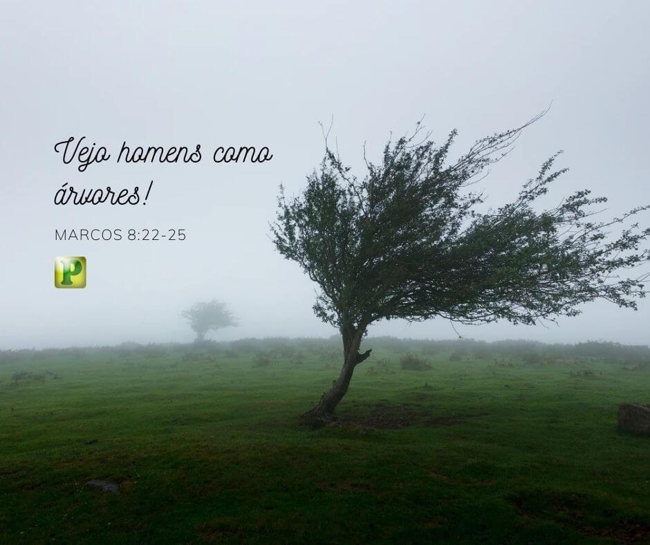 Vejo os homens como árvores! – Marcos 8:22-25